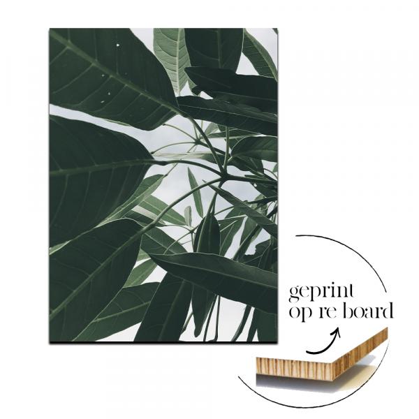 Reboard - Leaves