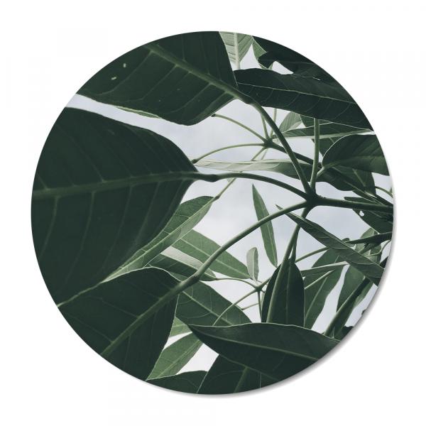 Cirkel - nature - leaves